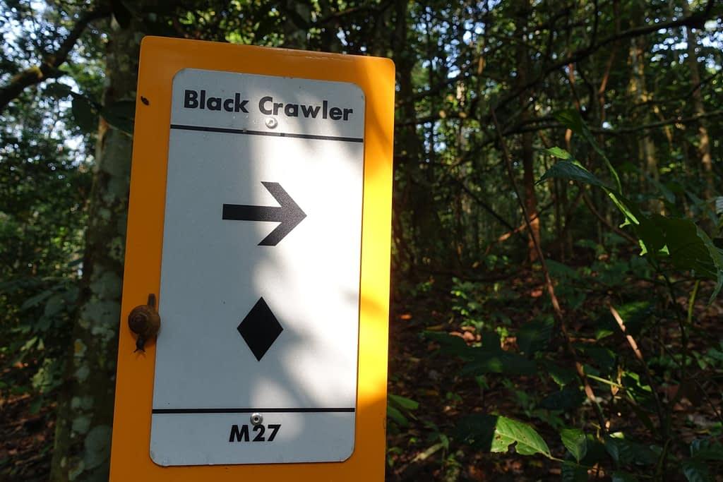 MountainBikeTrails Singapore ChestnutNaturePark BlackCrawler BlackDiamond